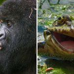Ekpresi Lucu Binatang Yang Tertangkap Kamera