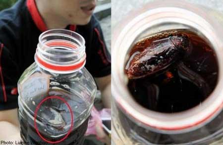 Moment Menjijikan Ketika Membeli Makanan Dan Minuman - Kecoa Di Dalam Teh Herbal