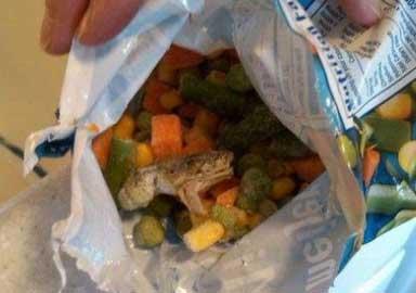 Moment Menjijikan Ketika Membeli Makanan Dan Minuman - Kodok dalam kemasan sayur