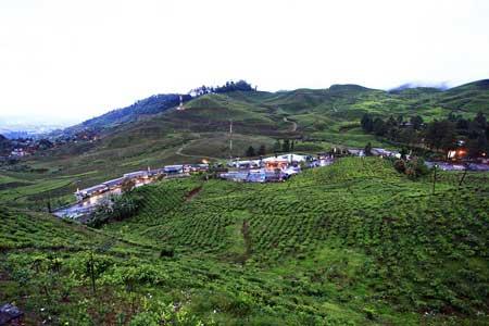 Tempat Camping Terbaik Di Bogor - Agrowisata Gunung Mas