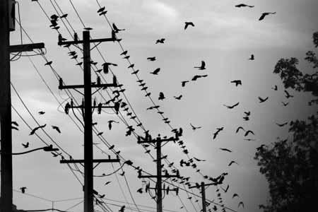 Deretan-Hewan-Yang-Mampu-Memprediksi-Terjadinya-Bencana-Burung