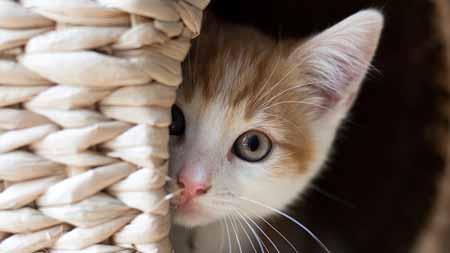 Deretan-Hewan-Yang-Mampu-Memprediksi-Terjadinya-Bencana-Kucing