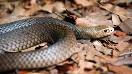Deretan-Hewan-Yang-Mampu-Memprediksi-Terjadinya-Bencana-ular