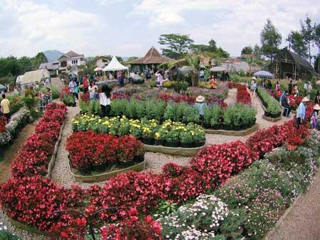 Taman Bunga Terindah Di Indonesia - Taman Bunga Begonia