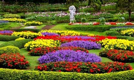 Taman Bunga Terindah Di Indonesia - Taman Bunga Cihideung
