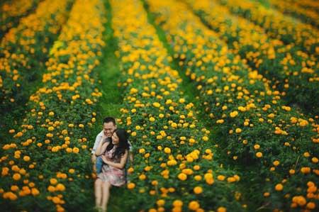 Taman Bunga Terindah Di Indonesia - Taman Bunga Marigold