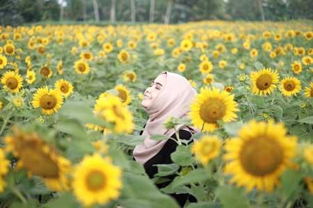 Taman Bunga Terindah Di Indonesia - Taman Bunga Matahari