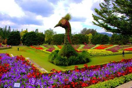 Taman Bunga Terindah Di Indonesia - Taman Bunga Nusantara