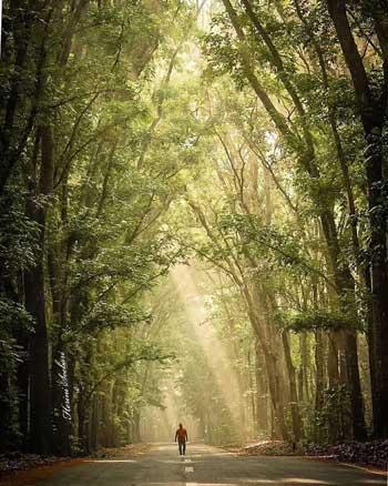 Tempat Wisata Di Banyuwangi - Taman Nasional Alas Purwo