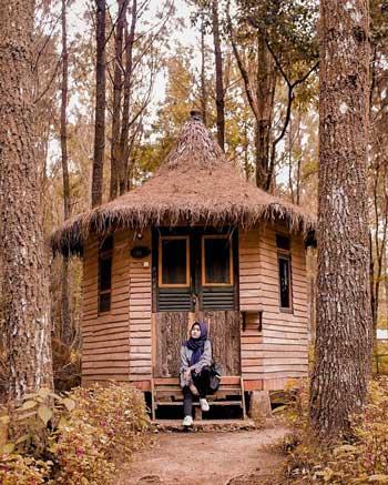 Tempat Wisata Di Banyuwangi - Wisata Pinus Songgon