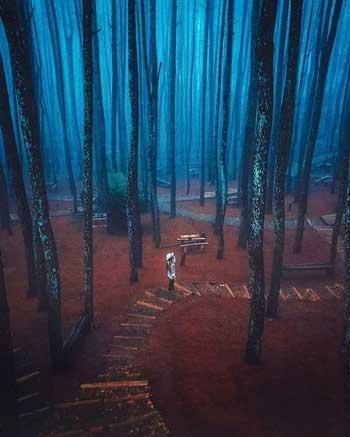 Tempat Wisata Alam Terbaik Di Jogja - Hutan Pinus Mangunan