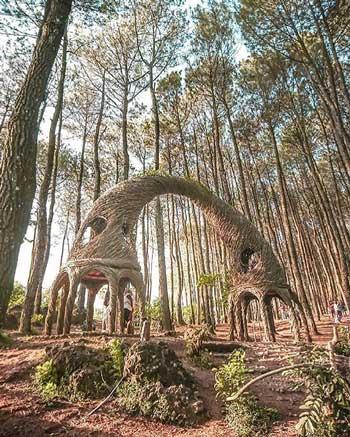 Tempat Wisata Alam Terbaik Di Jogja - Hutan Pinus Pengger