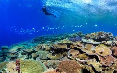 Tempat Wisata Terbaik Di Australia - Great Barrier Reef