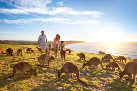 Tempat Wisata Terbaik Di Australia - Kangaroo Island