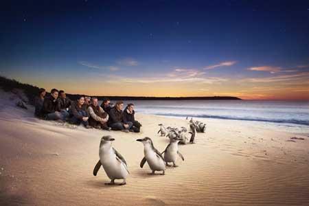 Tempat Wisata Terbaik Di Australia - Philip Island