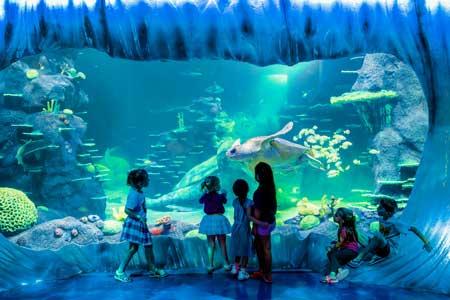 Tempat Wisata Terbaik Di Australia - Sydney Aquarium