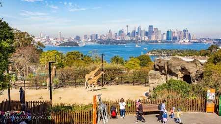 Tempat Wisata Terbaik Di Australia - Taronga Zoo