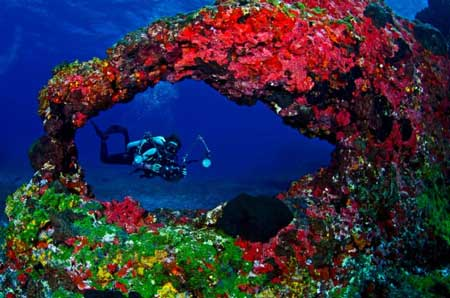 10 Destinasi Dengan Pemandangan Bawah Laut Terindah Di Dunia - Fernando De Noronha