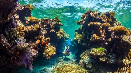 10 Destinasi Dengan Pemandangan Bawah Laut Terindah Di Dunia - Great Barrier Reef