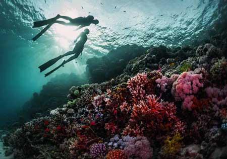 10 Destinasi Dengan Pemandangan Bawah Laut Terindah Di Dunia - Laut Merah