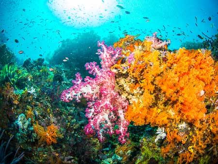 10 Destinasi Dengan Pemandangan Bawah Laut Terindah Di Dunia - Raja Ampat