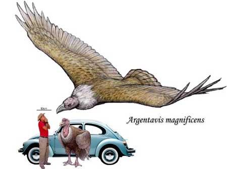 Fakta-Seputar-Argentavis-Magnificens