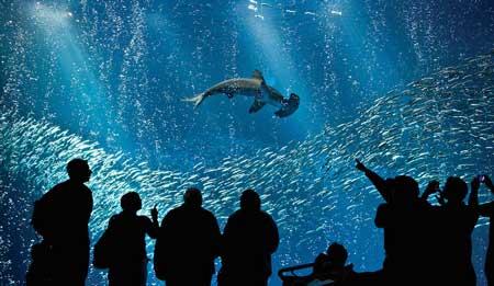 10 Destinasi Dengan Pemandangan Bawah Laut Terindah Di Dunia - Monterey Bay Aquarium