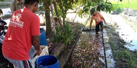 6 Kampung di Indonesia Berhasil Mengubah Selokan Kotor - Kampung Klodran