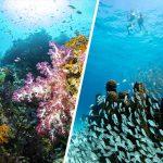 Pemandangan Bawah Laut Terindah di Dunia