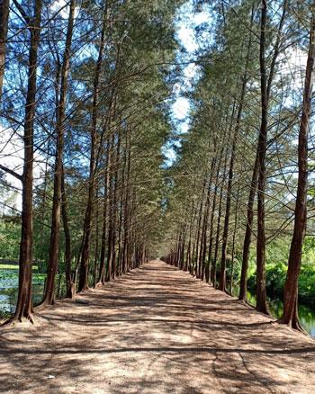 Daftar Tempat Wisata Paling Hits Di Bangka Belitung - Bangka Botanical Garden