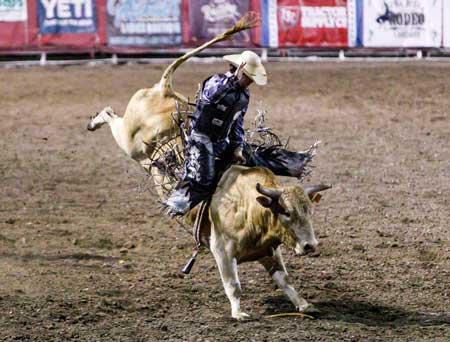 Olahraga Ekstrim Yang Paling Berbahaya - Bull Riding