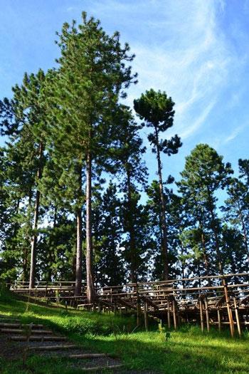Tempat Wisata Tegal Terbaru Yang Menarik Untuk Dikunjungi - Bukit Cepu