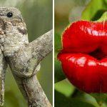 Berbagai Tumbuhan Dan Hewan Unik Yang Ada Di Hutan Amazon
