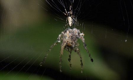 Berbagai Tumbuhan Dan Hewan Unik Yang Ada Di Hutan Amazon - Decoy Building Spider