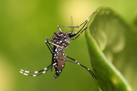Berbagai Tumbuhan Dan Hewan Unik Yang Ada Di Hutan Amazon - Nyamuk