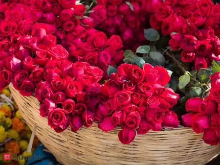jenis bunga yang cocok dengan zodiak - Libra - Bunga Mawar, Hydrangea/Kembang Bokor