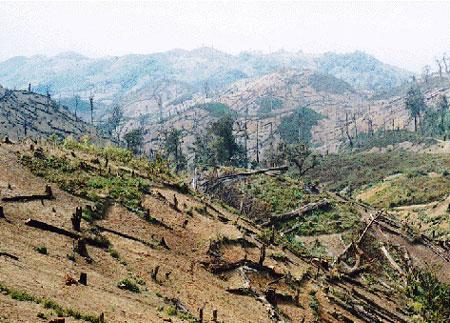 Fakta Kerusakan Hutan Kalimantan