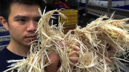 Peneliti dari Thailand Mengubah Bulu Ayam Menjadi Makanan