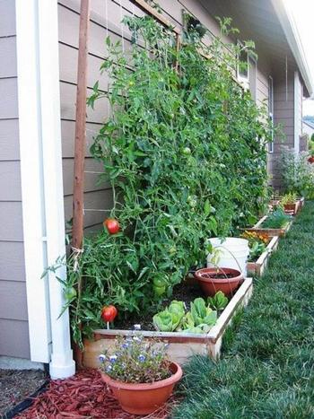 Inspirasi Kebun Sayur dan Buah di lahan sempit
