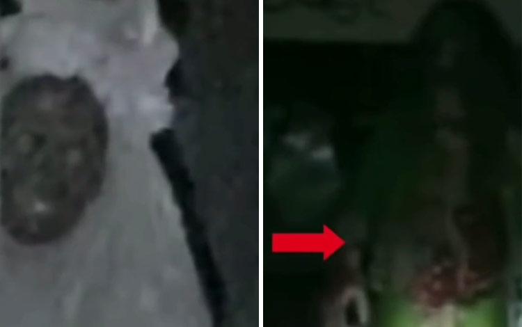 Video tiktok penampakan