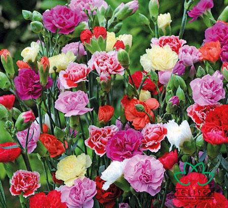 Aneka Jenis Tanaman Bunga Warna Warni Untuk Taman