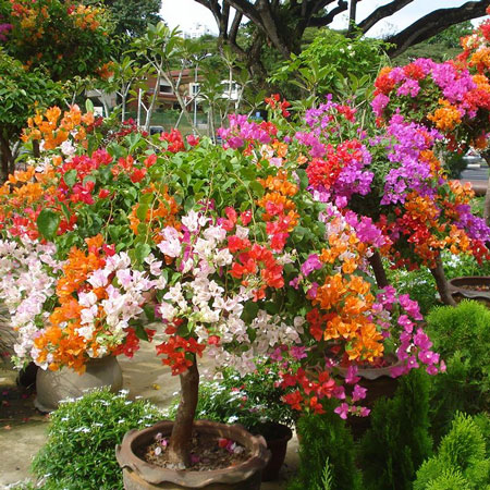Bunga Warna Warni Untuk Taman