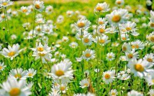 Jenis Bunga Warna Warni
