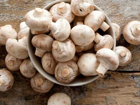 Jenis-jenis Jamur Yang Bisa Dimakan