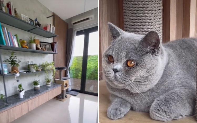 Viral! Kamar Kucing Satu Ini Punya Fasilitas Yang Bikin Warganet Mengiri!